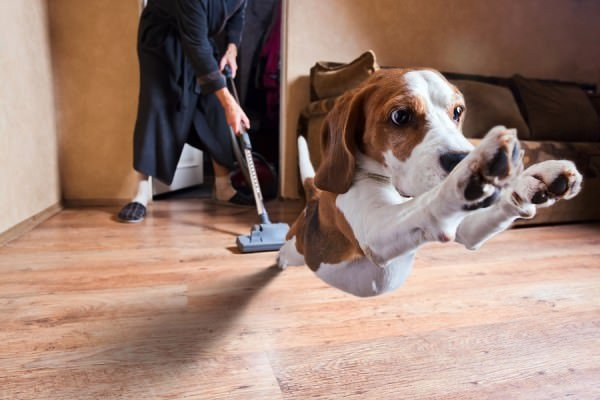 pet-proofing-pet-sitting-dog-walking-Towson-Baltimore