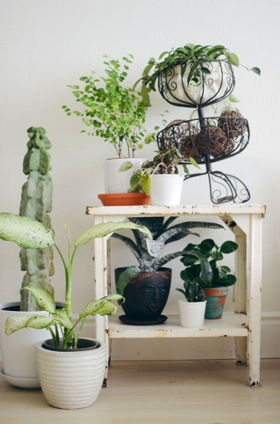 Keeping House Plants Alive When You're Away