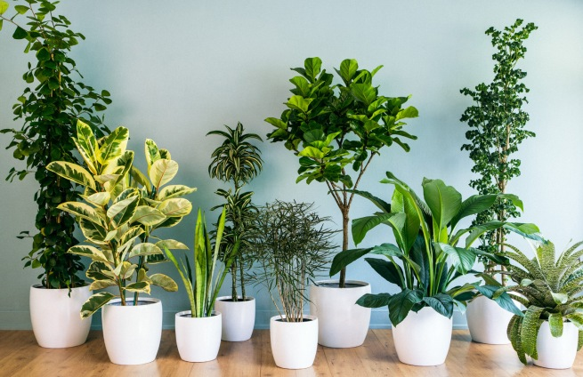 5_Tips_for_Maintaining_Houseplants